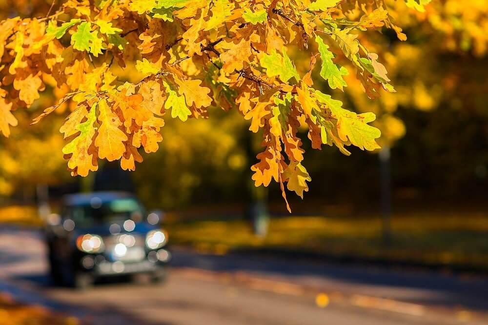 Az őszi utak veszélyei